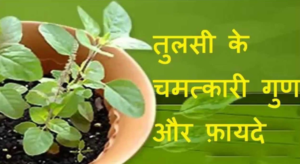 Tulsi Ke Gun aur Fayde - Benefits of Tulsi Plants