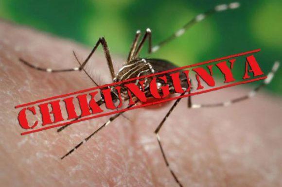 chikungunya-ke-lakshan-ilaj-gharelu-upay-%e0%a4%9a%e0%a4%bf%e0%a4%95%e0%a4%a8%e0%a4%97%e0%a5%81%e0%a4%a8%e0%a4%bf%e0%a4%af%e0%a4%be-%e0%a4%95%e0%a5%87-%e0%a4%b2%e0%a4%95%e0%a5%8d%e0%a4%b7%e0%a4%a3