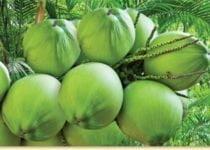 नारियल पानी के फायदे, गुण एवं नुकसान - Coconut Benefits and Side-Effects in Hindi