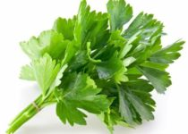 हरा धनिया के औषधीय गुण एवं फायदे - Benefits of Coriander Leaves in Hindi