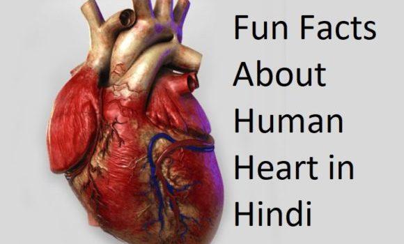 दिल (हृदय) के बारे में रोचक तथ्य - Interesting Facts About Heart in Hindi