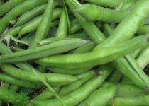 बीन्स खाने के फायदे - Health Benefits of Green Beans In Hindi