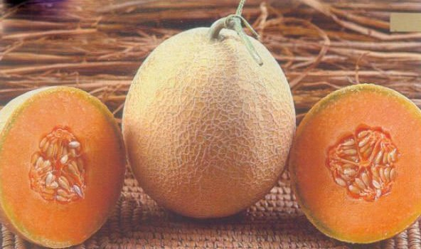 खरबूजे के बीज के फायदे Health Benefitsof Muskmelon Seeds in Hindi